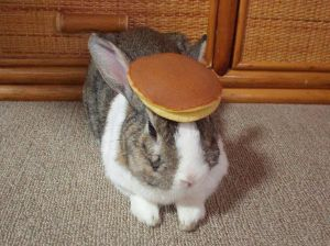 There's a bunny, balancing a pancake on its head.